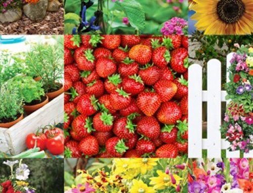 Flower and Garden Supplies Fundraiser
